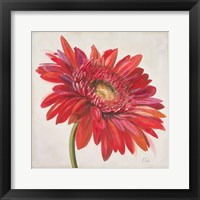 Framed Red Gerber Daisy