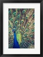 Framed Royally Blue I