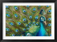 Framed Wild Feathers
