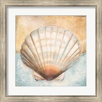 Framed Seashell Collection III