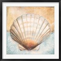Framed Seashell Collection III
