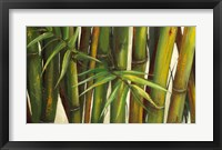 Framed Bamboo on Beige II
