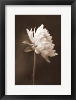 Framed Sepia Flower I