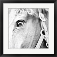 Framed In the Stable I