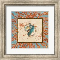 Framed Coral Medley Shell I