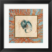 Framed Coral Medley Shell II