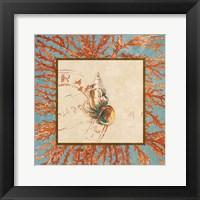 Framed Coral Medley Shell III