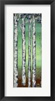 Tall Trees II Framed Print