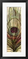 Framed Peacock Feather I