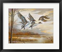 Framed Pintails