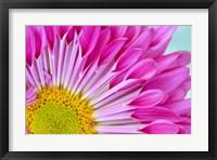 Framed Fuschia Bloom