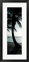 Framed Cool Bimini Palm II