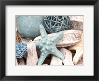 Framed Bundle of Shells I