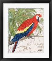 Another Bird in Paradise I Framed Print