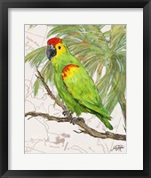 Framed Another Bird in Paradise II