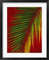 Framed Palmas En Fuego III