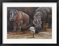 Framed Baby Hippos