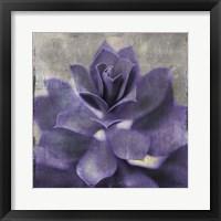 Framed Lavender Succulent I