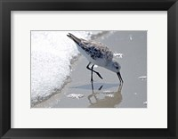 Framed Sandpiper IIA
