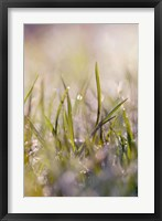 Framed Soft Morning Dew I