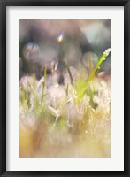 Framed Soft Morning Dew II