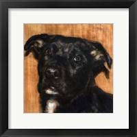 Framed Puppy Dog Eyes I