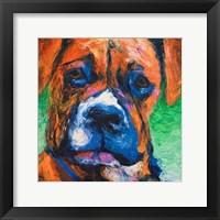 Puppy Dog Eyes II Framed Print