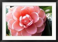 Framed Coral Bloom