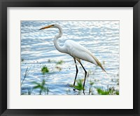 Framed By The Lake Egret