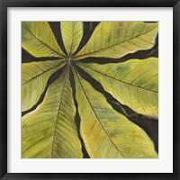 Evergreen II Framed Print