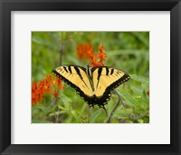 Framed Black Yellow Butterfly I