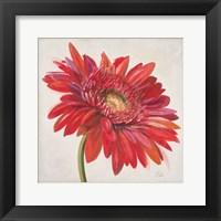 Framed Red Gerber Daisy