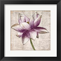 Framed Defined Lotus I