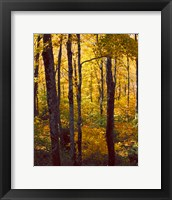 Framed Sanctuary Woods I