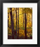 Sanctuary Woods I Framed Print