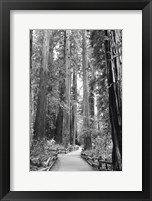 Tree Path I Framed Print
