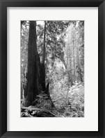 Framed Tree Path II