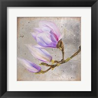Magnolia on Silver Leaf I Framed Print