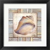 Framed Beach Shell II