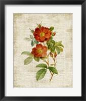 Roses on Newsprint II Framed Print