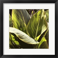 Framed Plant Exploration I