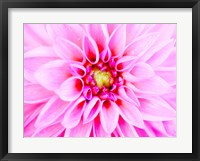 Framed Pink Explosion I