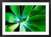 Framed Green Intrigue