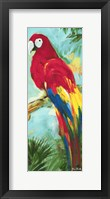 Framed Tropic Parrots I