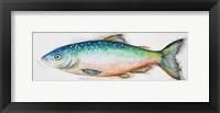 Watercolor Fish I Framed Print