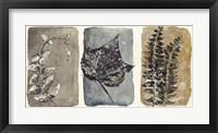 Watercolor Sepia Leaves I Framed Print