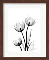 Framed Tulips High Contrast