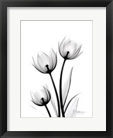 Framed Tulips High Contrast