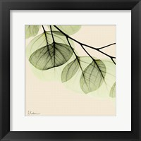 Framed Mint Eucalyptus 3