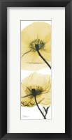 Framed Iceland Poppy Yellow